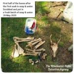 bones from jersey devil-deer skeleton cleaning
