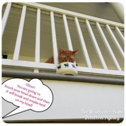 Oliver on balcony