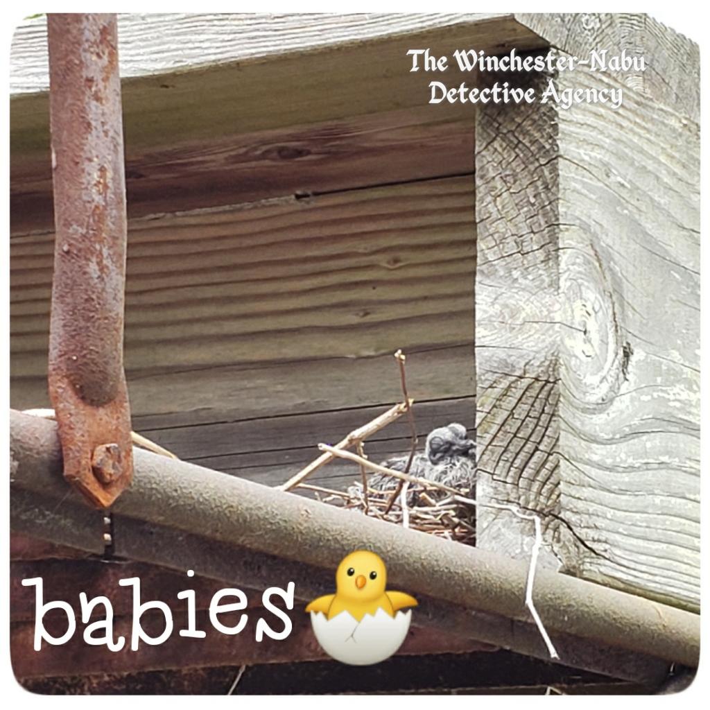20200602 baby doves3