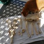 Oliver and bones of the jersey devil-deer skeleton