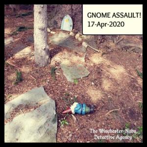 Gnomez Addams lying on the ground
