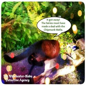 Gus stalking chipmunks in fairy garden
