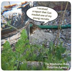 sgt. burrows chipmunk at bunker