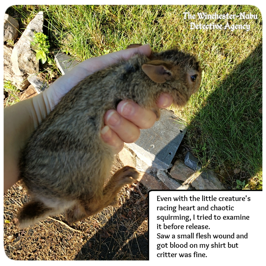 20200712 little bunny 4