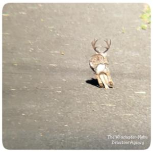 bunny rabbit wolpertinger