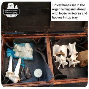 skeleton bones in crate