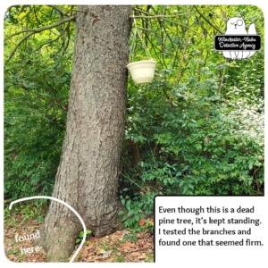 tree where mice were found
