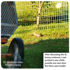 small bunny in backyard by fence