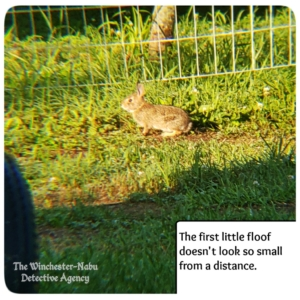 small bunny in yard