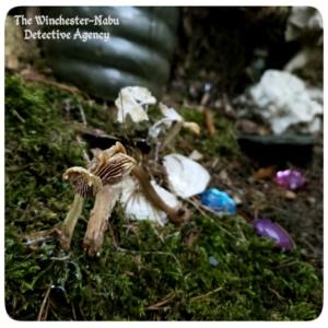 tiny mushrooms and fairy jewels