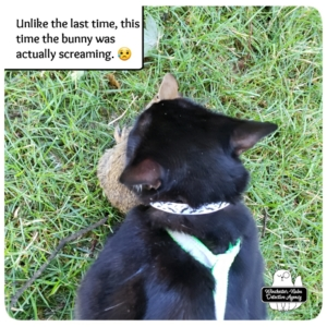 Gus captures baby bunny