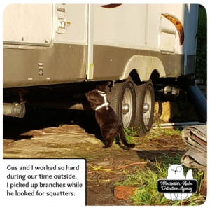 Gus inspecting trailer