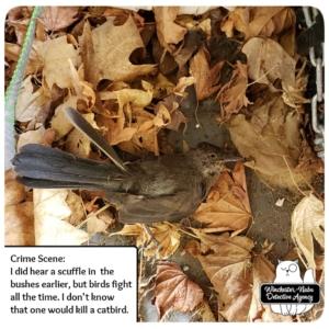 catbird murder