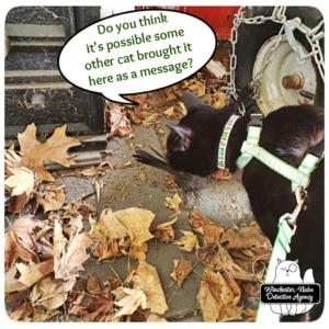 Gus investigating catbird murder