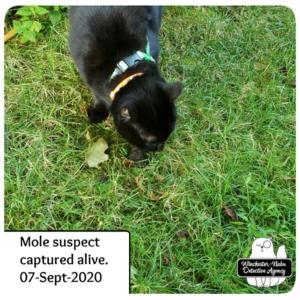 Gus captures mole