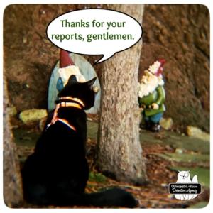 Gus in gnome grove