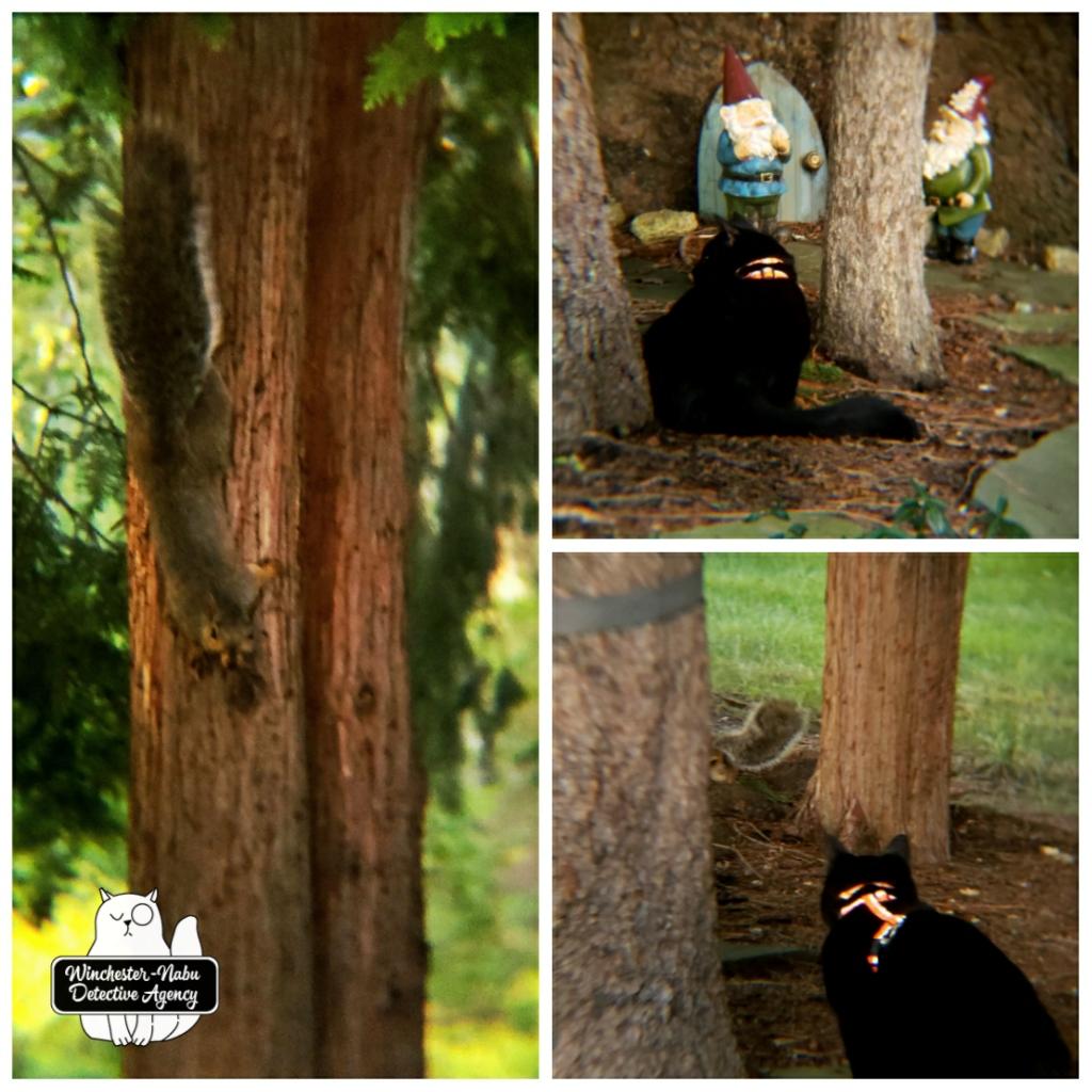 20200912 squirrel in gnome grove