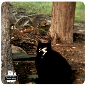 Gus stalking squirrel