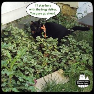 Gus in plants