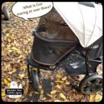 Oliver in stroller