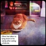 Oliver on catnip