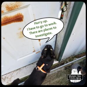 Gus begging at door