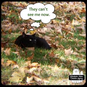 Gus in the leaves