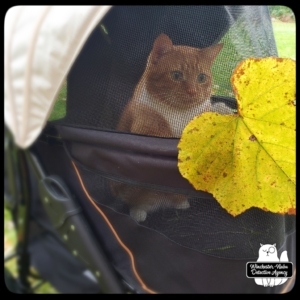 Ollie in his buggy