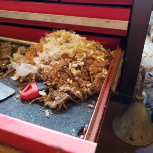 mouse nest in toolbox