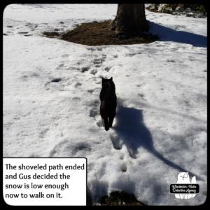 Gus walking in snow