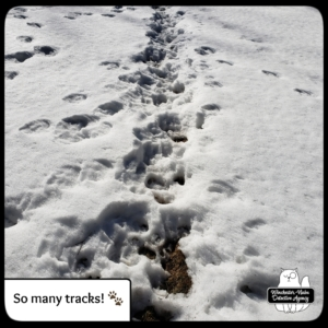 wildlife tracks in snow