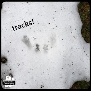 wildlife snow tracks