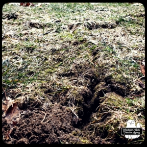close up of ground