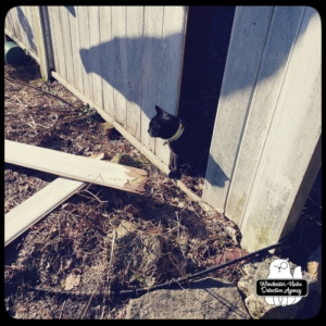 Gus finds broken fence