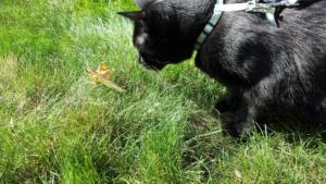 2017 praying mantis and Gus in grass