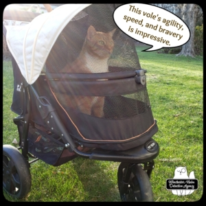 Oliver in his buggy