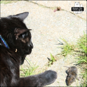 Gus playing with Paula vole on stone path