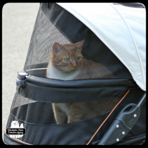 Oliver in buggy