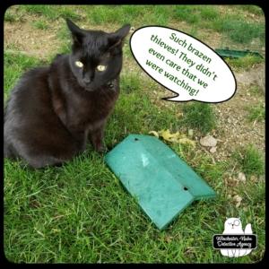Gus and broken bird feeder