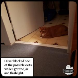 Oliver supervising mousing
